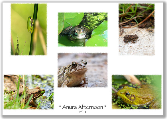 Picture of frog note cards
