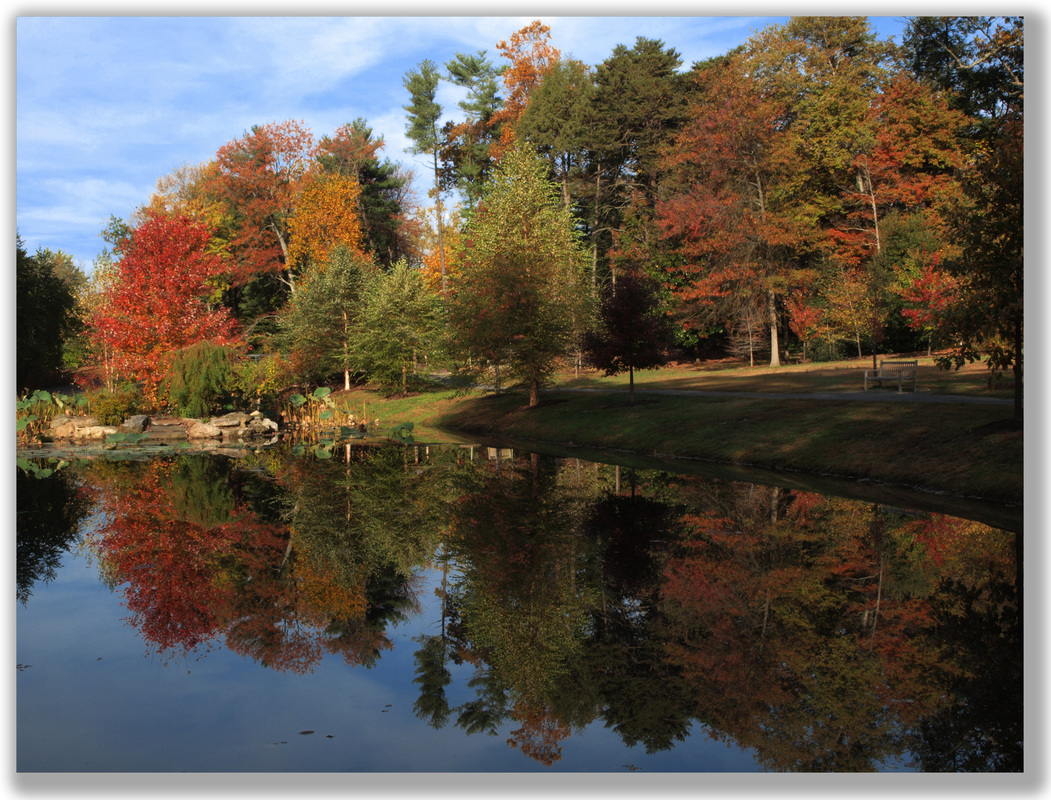 Photograph of early autumn trees and a pond