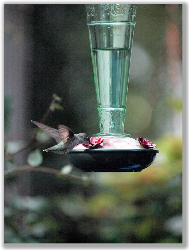 Photograph of a Ruby-Throated Hummingbird at a hummingbird feeder