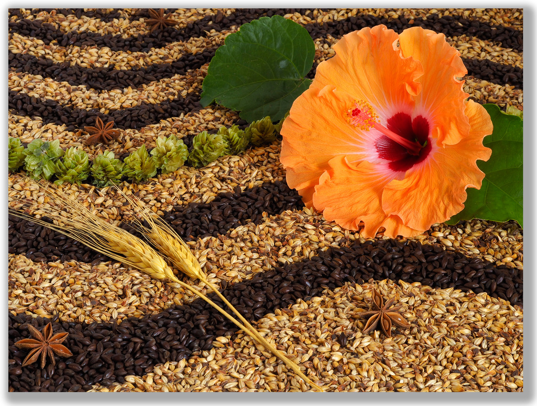 Photograph of Hibiscus flower with barley, wheat, hops background