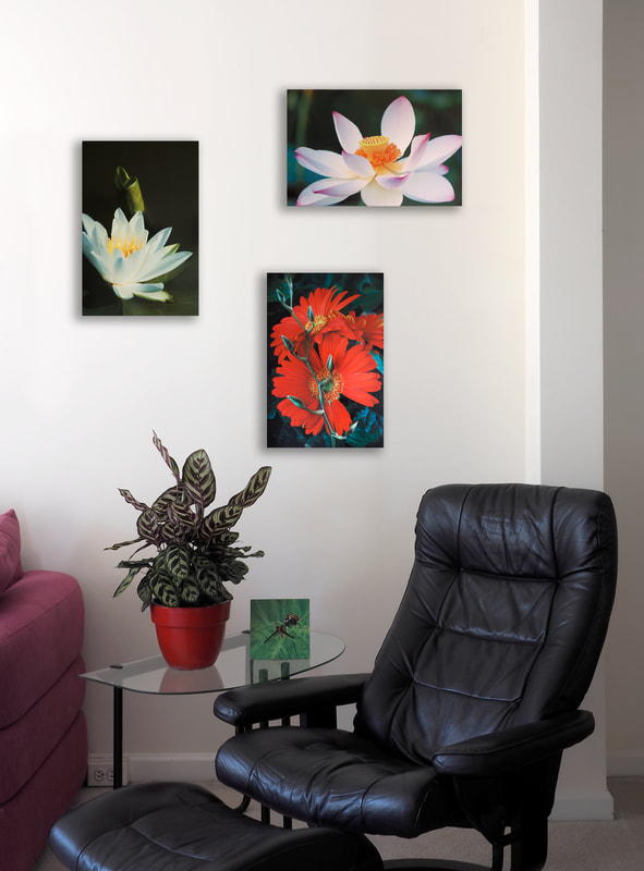 3 Aluminum images in a sittng room include a white lotus, white lily, and gerbera daisy
