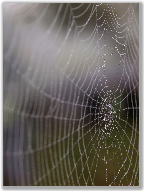 photograph of water in a spider web focused in the middle