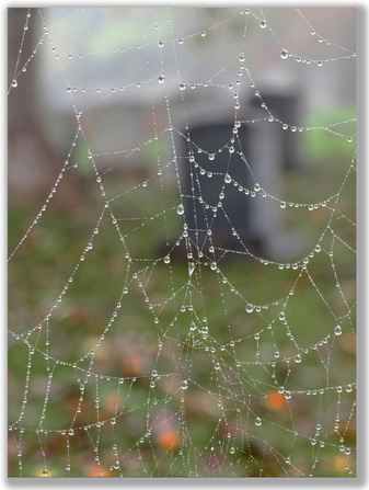 Photograph of cemetary seen through a spider web with water drops on it