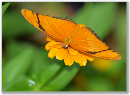 Photograph of an orange butterfly with wild eyes