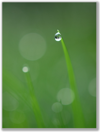 Photograph of a water drop on a grass blade