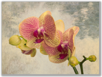 Photograph of an Orchid with impressionist-style background