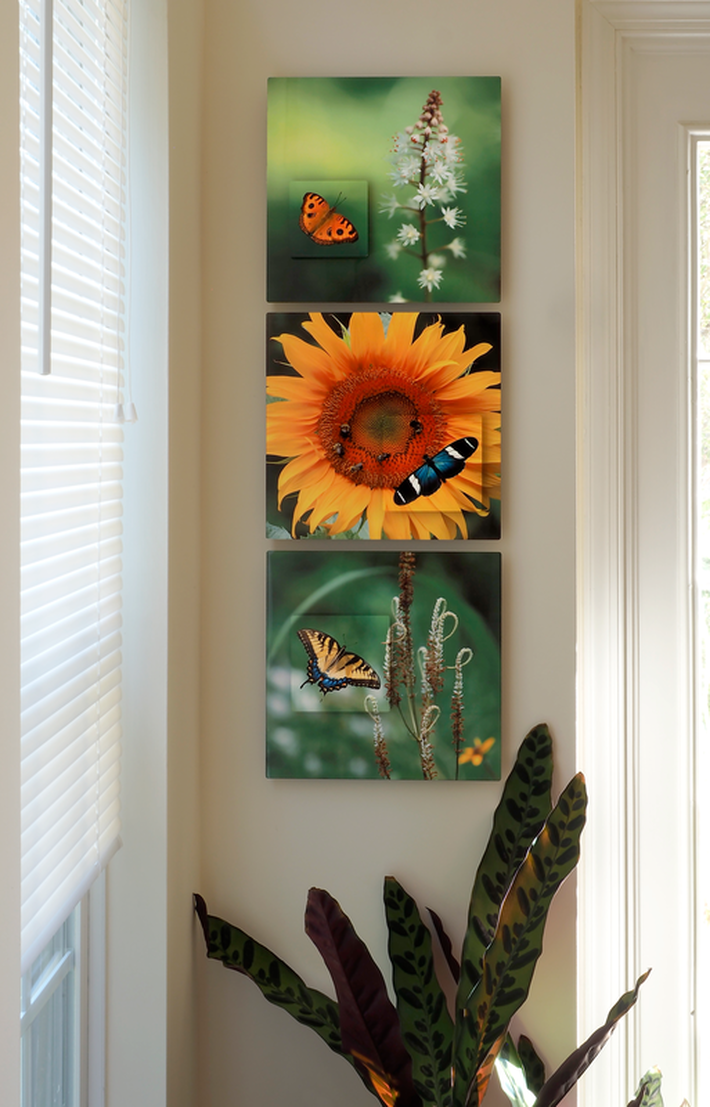 3 images in aluminum all featuring butterflys in a small hallway setting