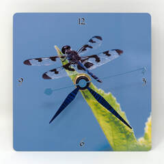 Clock showing a steel color dragonfly