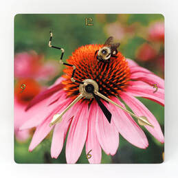 bumble bee on a pink coneflower