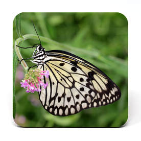 Coaster showing butterfly with pink flower
