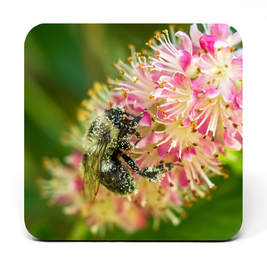 Coaster showing bee covered in pollen