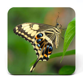 Coaster showing a swallowtail butterfly on a leaf