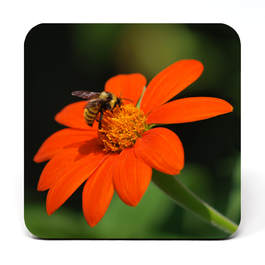 Coaster showing a bee on an orange flower