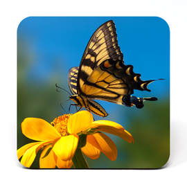 Coaster showing a Swallowtail butterfly taking flight