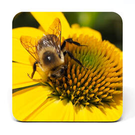 Close up of bee on a yellow coneflower
