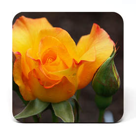 Coaster showing a yellow rose with bud